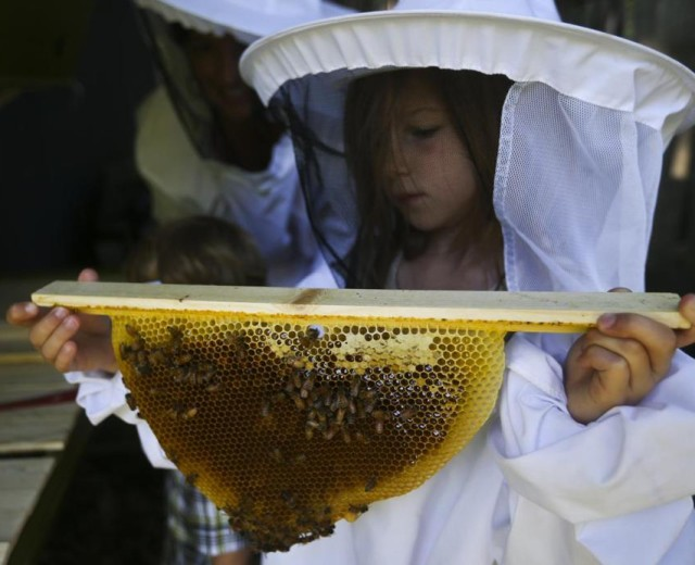 Local Beekeepers Busy as their Pets