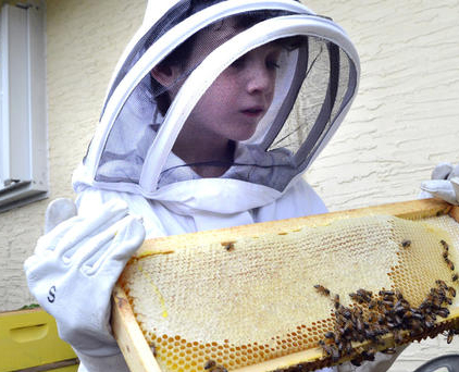 Why urban beekeeping is right for Los Angeles