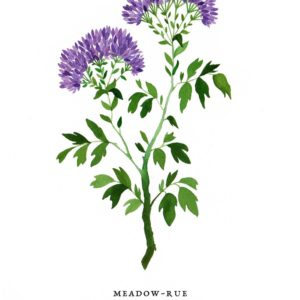 meadowrue_dna