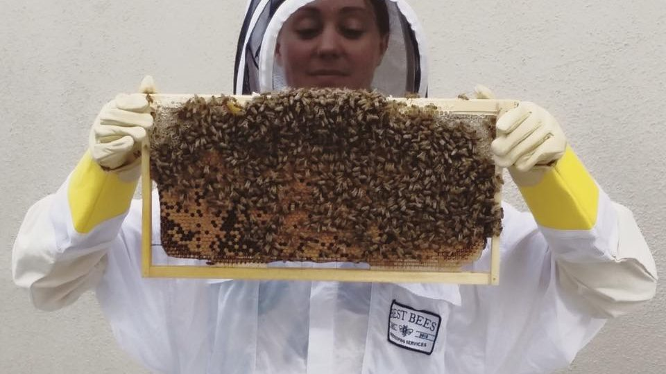 Los angeles beekeeper kelly allin