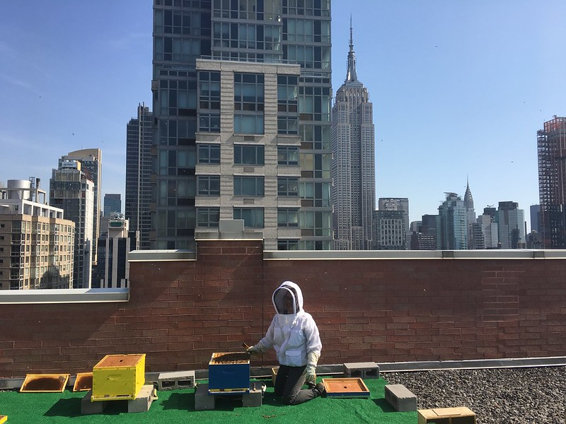 Beekeeper Marcella tending to beehives in Manhattan