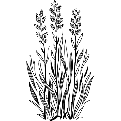 best_bees_grasses_trimmed_400