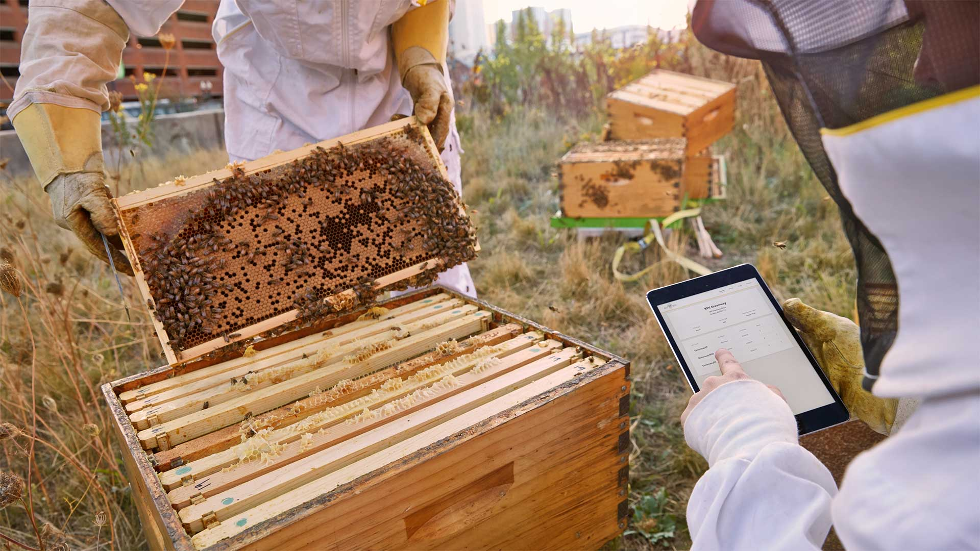 the_best_bees_research_featured