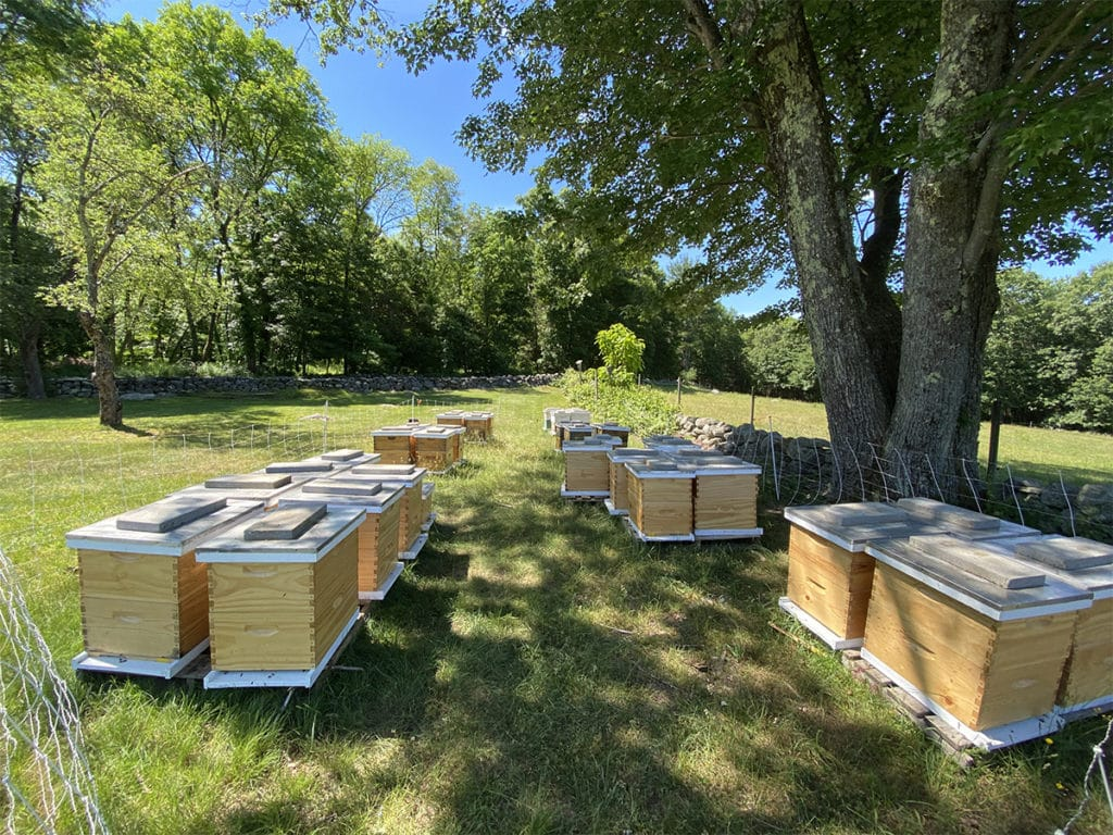 Photo of an apiaray of beehives located in Massachusetts