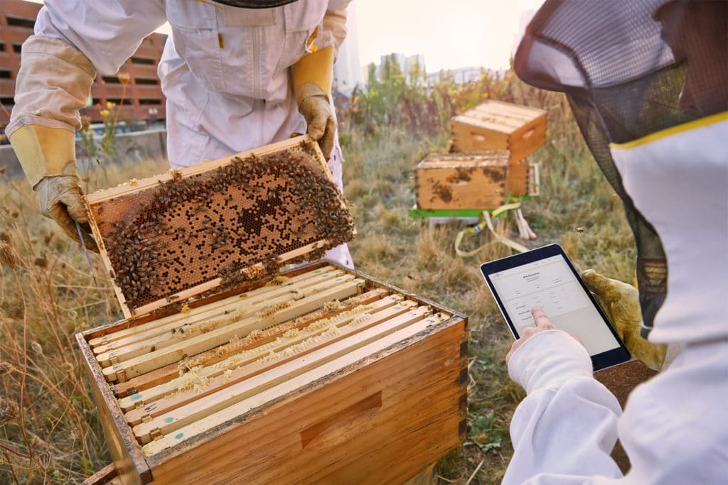 best_bees_blog_research_ipad