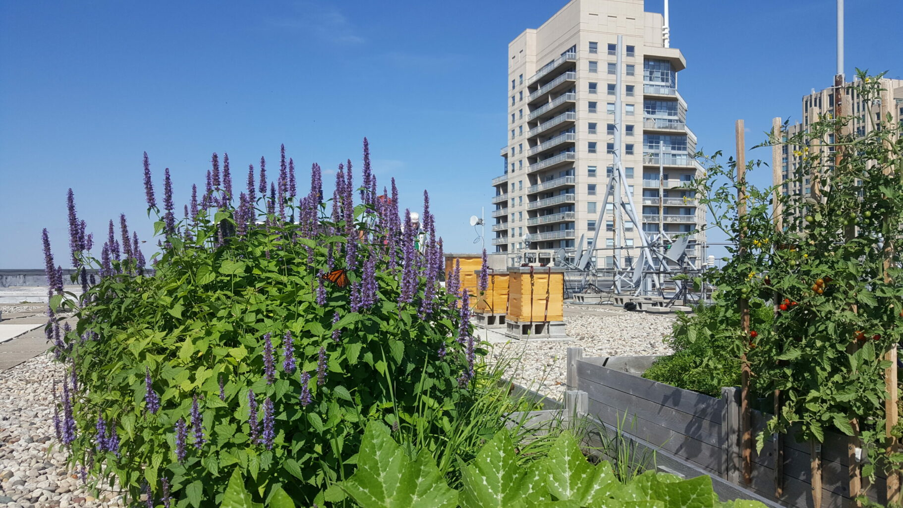 Green roofs help you get LEED Certification