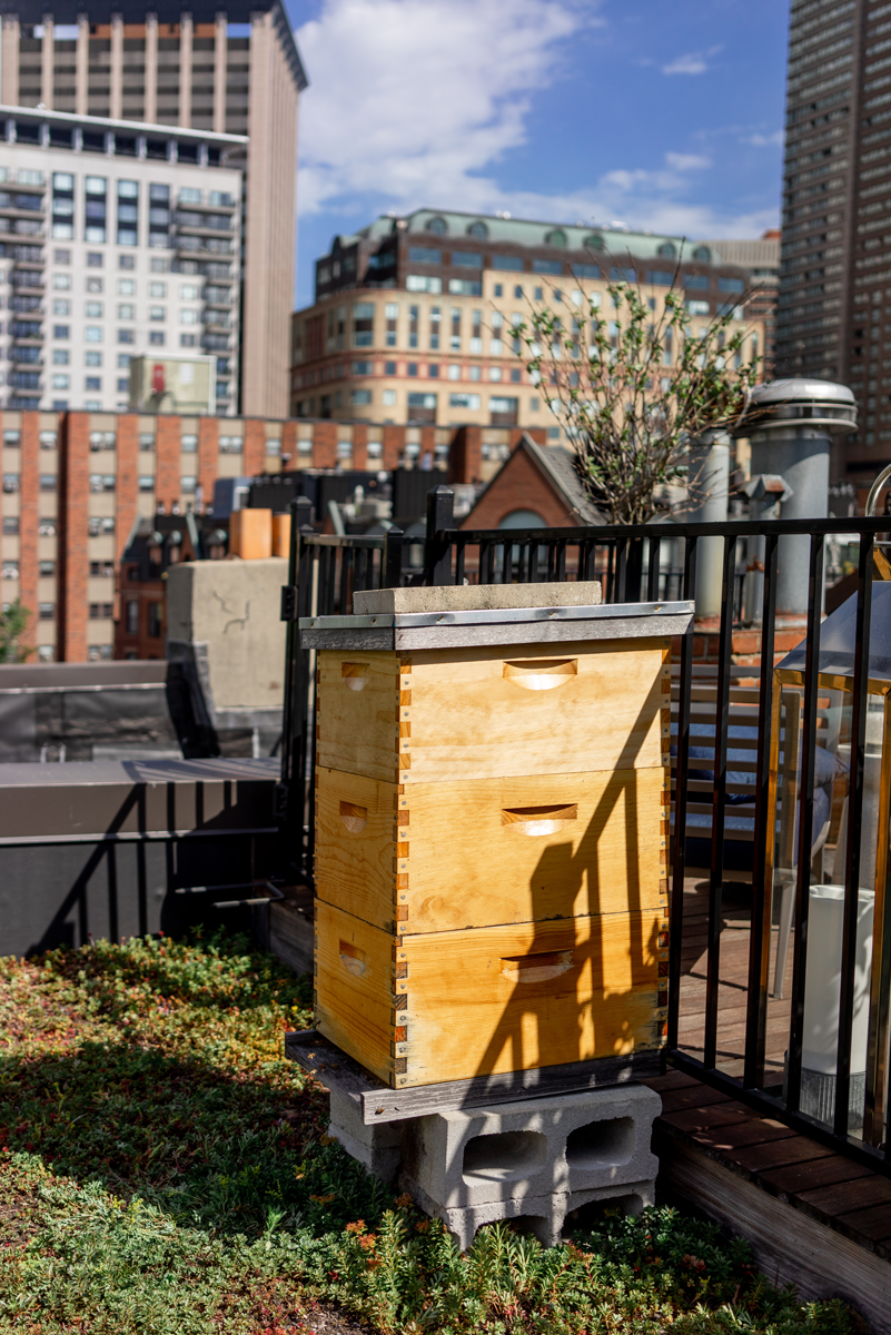 Image of beehive on a city roopftop