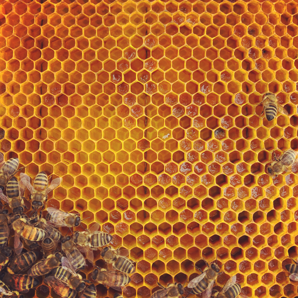 Honeybees on a frame of bright yellow hexagon shaped comb