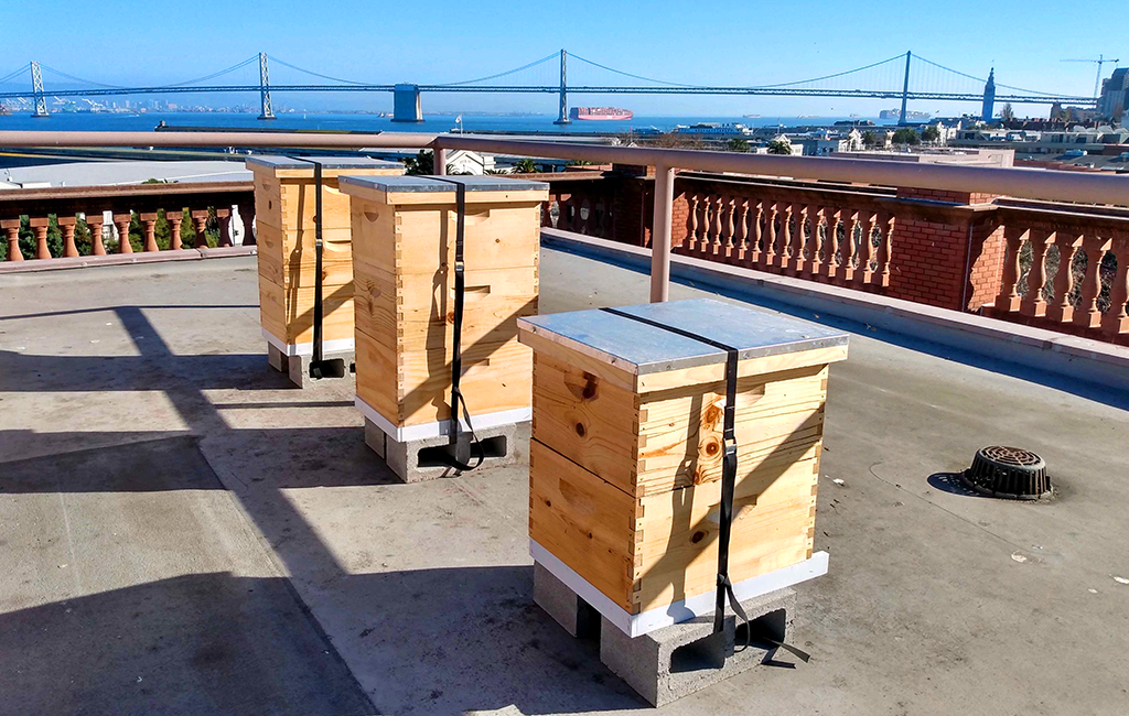Beehives in San Fransisco