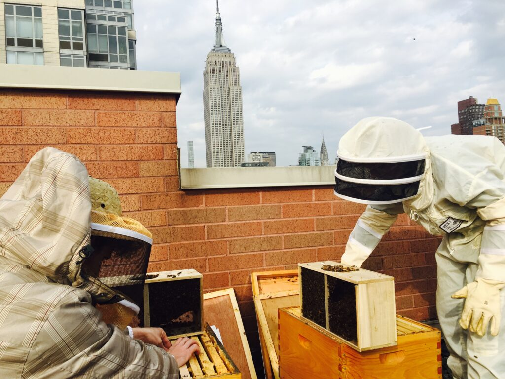Best Bees expert beekeepers celebrate world bee day while doing a hive check on a rooftop and urban beehive.