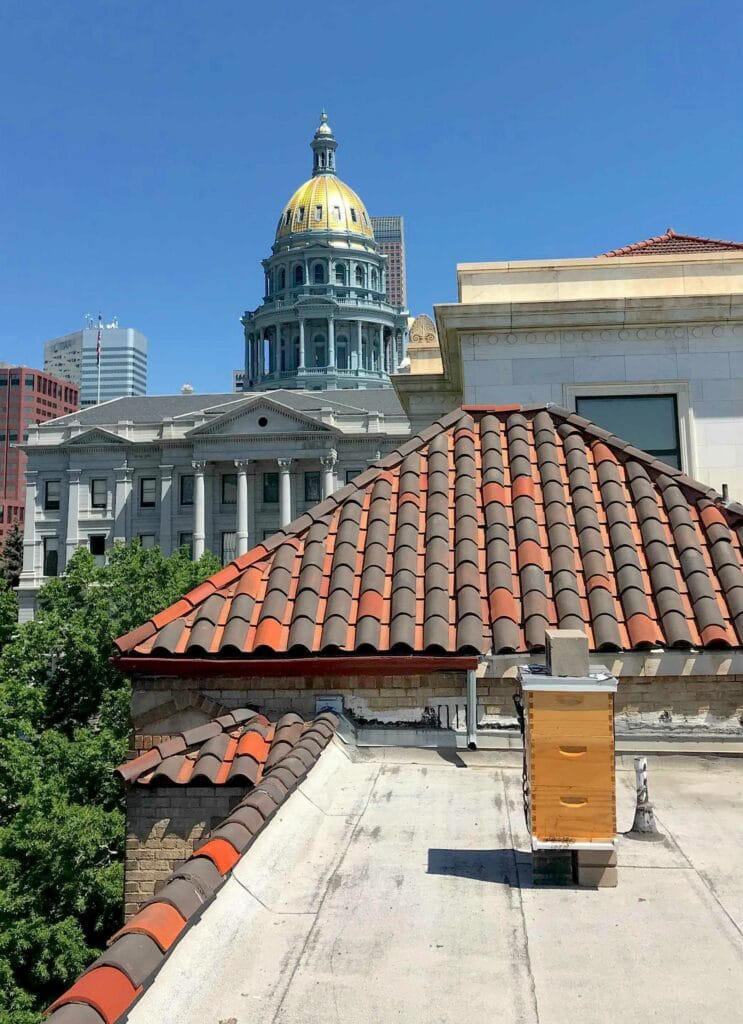 A Best Bees beehive sits on top of a roof in Denver.