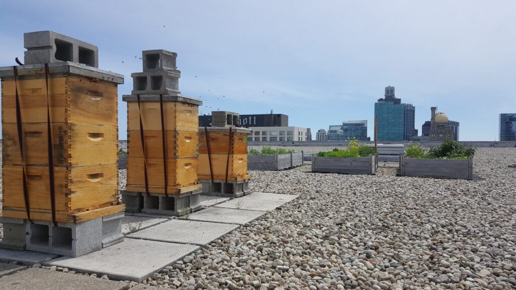 Commercial Real Estate (CRE) Rooftop Beehives