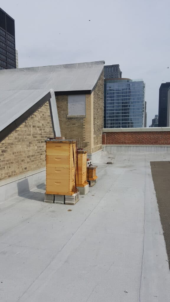 Rooftop hive