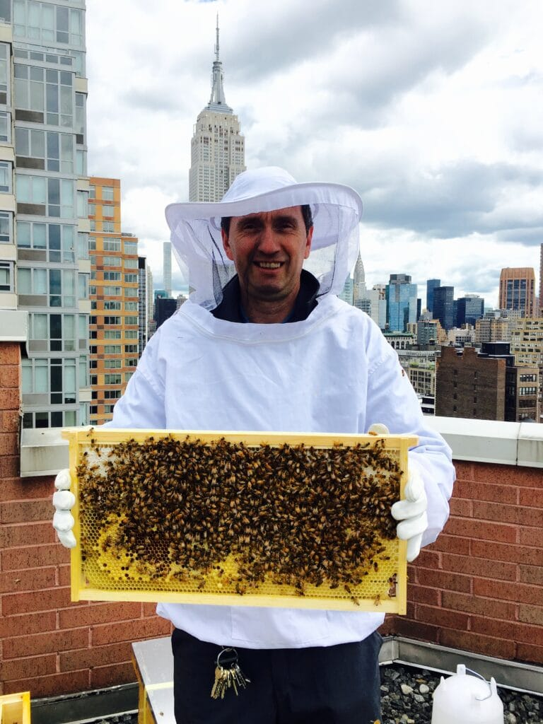 Property Manager with bees on a rooftop.