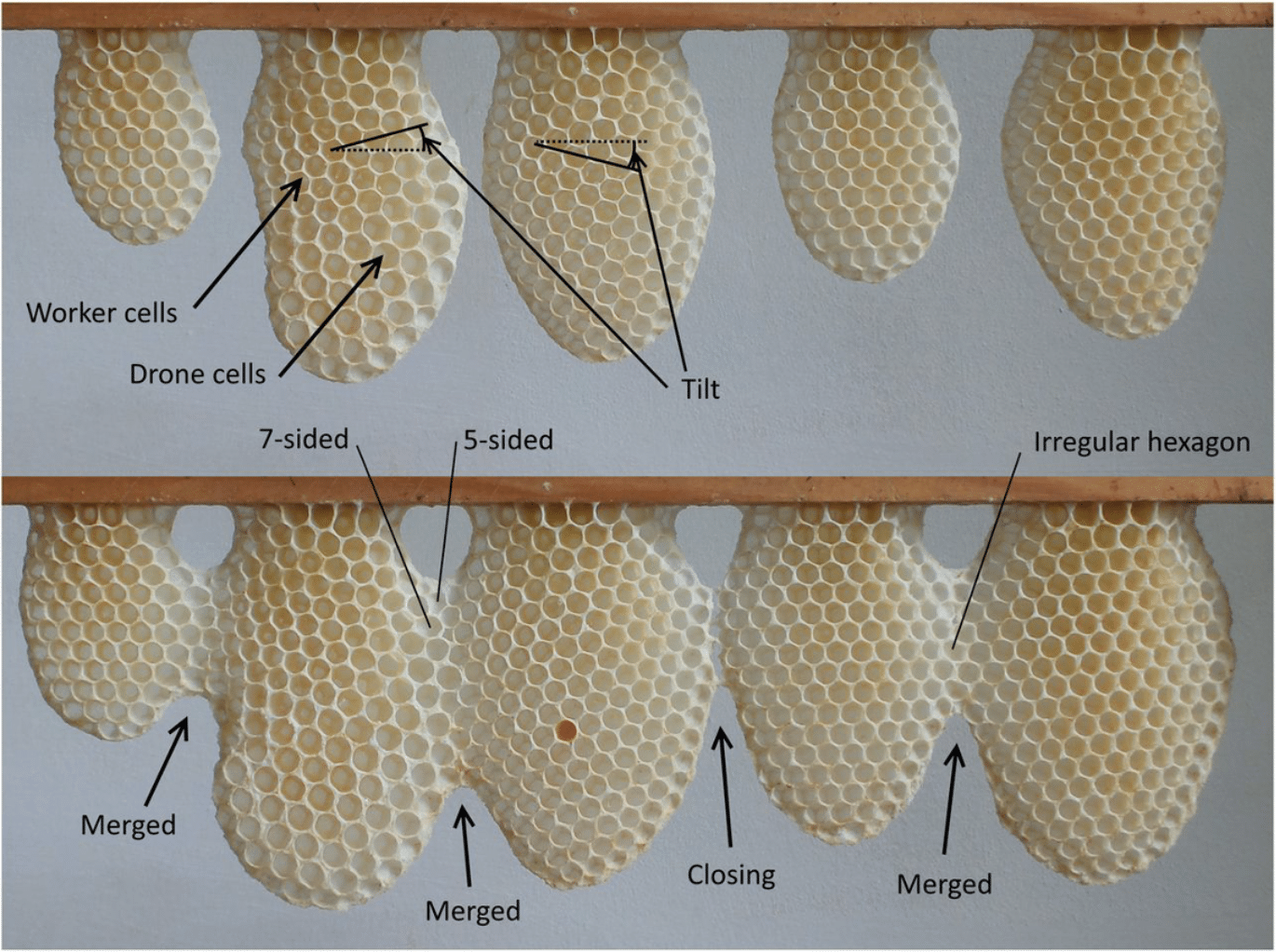 various honeycomb shapes and weights